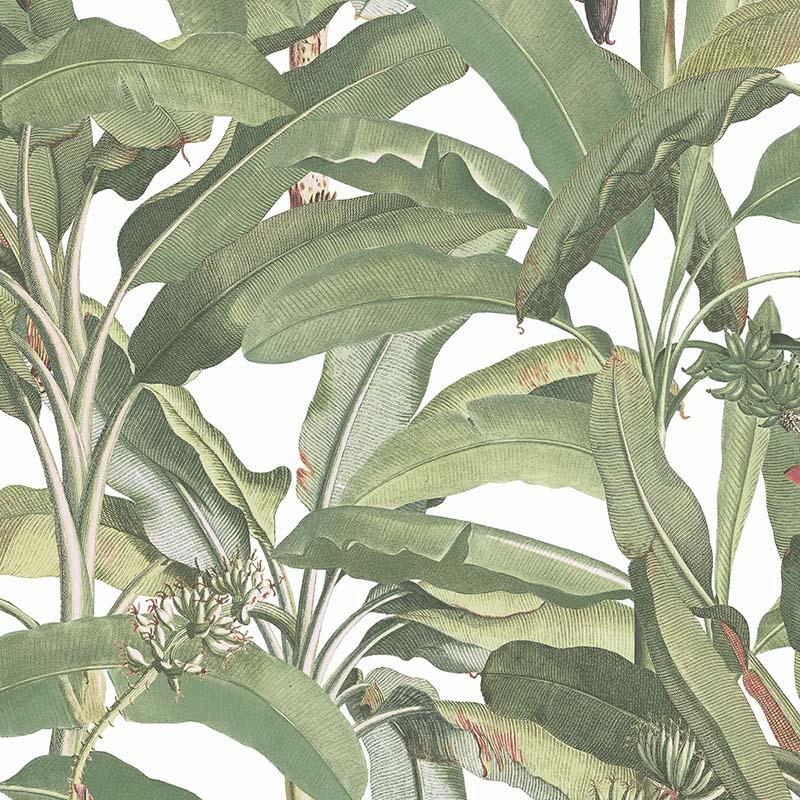 Papier Peint Feuillage Vert Fond Blanc Mh36534 De La Collection