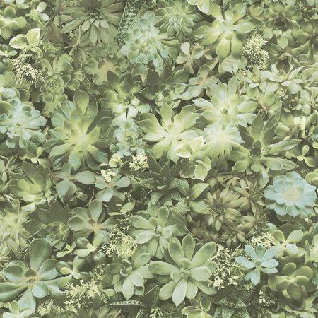 PLANTES GRASSES VERTES – 7320