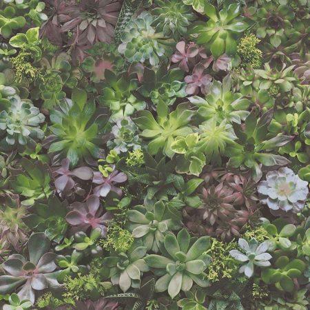 PLANTES GRASSES MULTICOULEUR – 7322