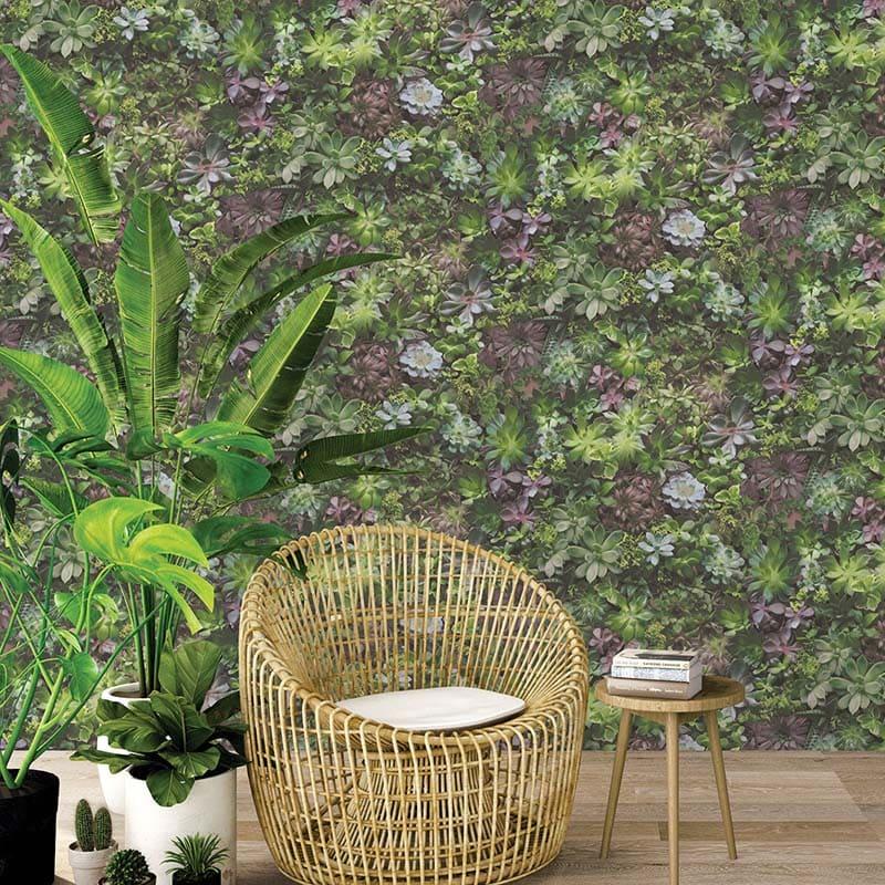 Evergreen | PLANTES GRASSES MULTICOULEURCOULEUR - 7322