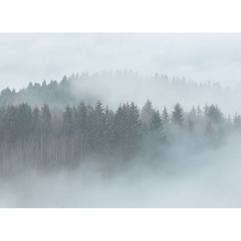 MISTY FOREST – DD118604
