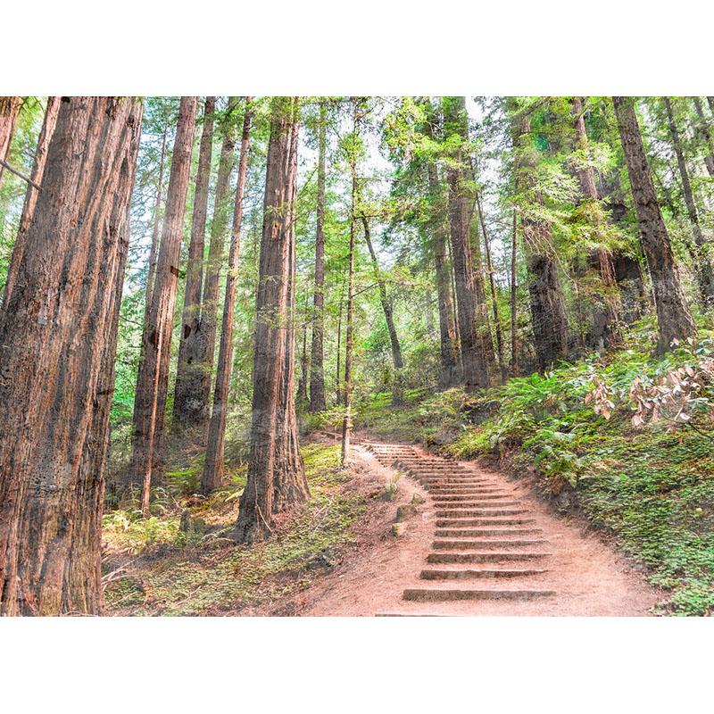 FOREST WALK 1 – DD118626