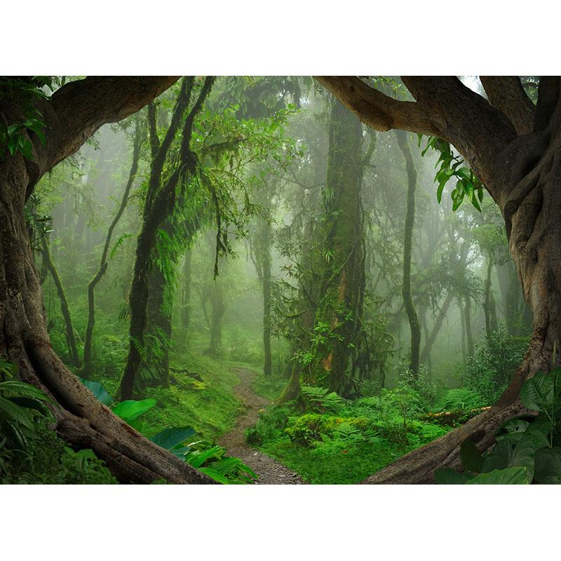 TROPICAL FOREST – DD118632