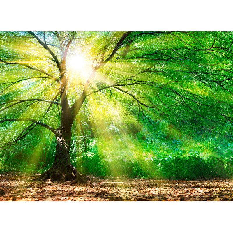 FOREST LIGHT – DD118798